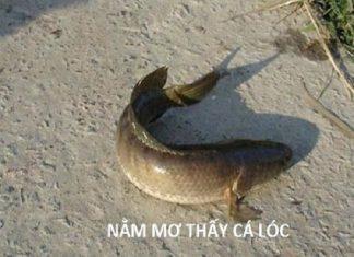 Mơ thấy cá lóc có điềm báo gì? đánh con số nào?